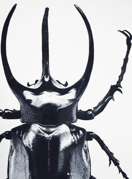 Zhana's prize winning beetle drawing